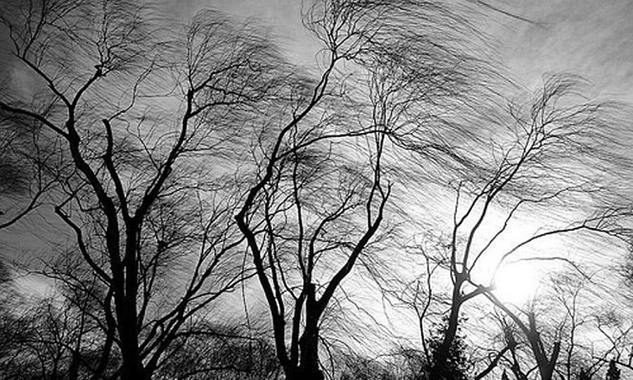 альянс картинки как деревья гнет ветер для этого