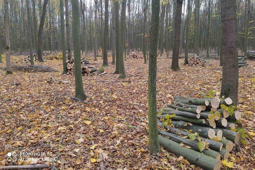 Новини Вінниці / Чергову незаконну вирубку лісу задокументовано на Вінниччині: збитки склали понад 9 млн гривень